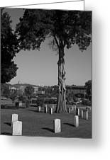 Ancient Cedars And Tombstones Greeting Card