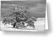 Ancient Oak Greeting Card