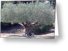 Ancient Old Olive Tree In South France Greeting Card