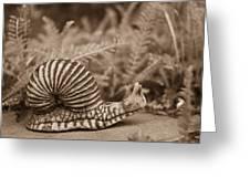 Ancient Snail Greeting Card