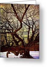 Ancient Winter Tree Greeting Card