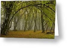 Ancient Wood Pasture Greeting Card