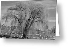 And The Willow Tree Weeps Greeting Card