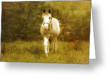 Andre On The Farm Greeting Card