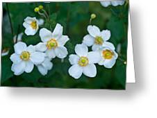 Anemone Cluster 1 Greeting Card