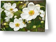 Anemonae Cluster 7 Greeting Card