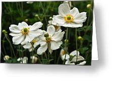 Anemonae Cluster 8 Greeting Card
