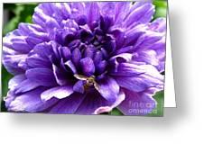 Anemone Coronaria Named Lord Lieutenant Greeting Card