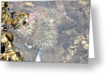 Anemones And Shells Greeting Card