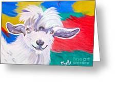 Angora Sweetie Greeting Card