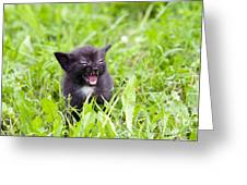 Angry Kitten Greeting Card