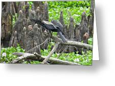 Anhinga 1 Greeting Card