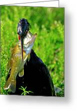 Anhinga And The Fish Greeting Card