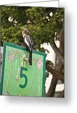 Anhinga On Marker 5 Greeting Card