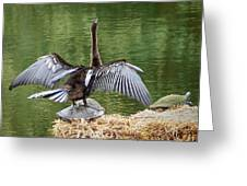 Anhinga On Turtle Greeting Card