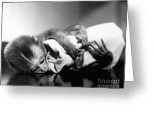 Animal Research Greeting Card