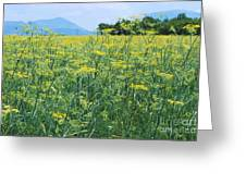 Anise To The Mountains Greeting Card