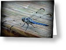 Anisoptera Greeting Card