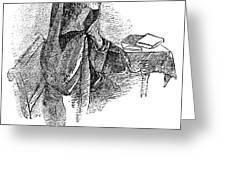 Anne BrontË (1820-1849) Greeting Card by Granger