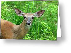 Another Deer Greeting Card