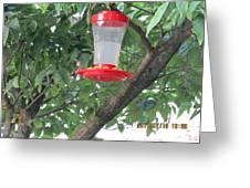 Another Hummingbird Greeting Card