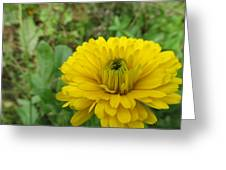 Another Many Yellow Petals Greeting Card