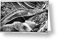 Ant Eater Greeting Card