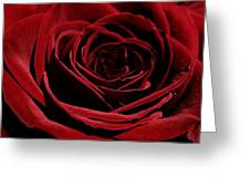 Ant Peeking Out Of Rose Greeting Card