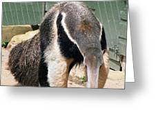 Anteater 2 Greeting Card