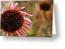 Antique Cone Flower Greeting Card