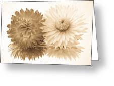 Antique Floral Duo Greeting Card