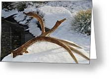 Antler 2 Greeting Card by Heather L Wright
