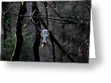 Antlers - Skull - In The Air Greeting Card