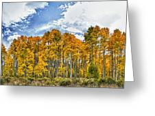 Apen Trees In Fall Greeting Card