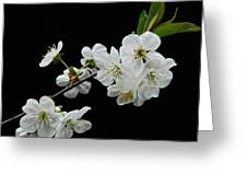 Apple Blossom 1015 Greeting Card