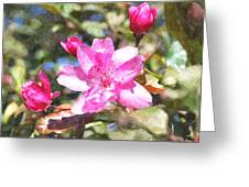 Apple Blossom Abwc Greeting Card