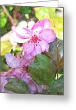 Apple Blossom II Ab2wc Greeting Card