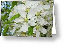 Apple Blossoms On The Trail Greeting Card