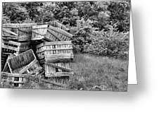 Apple Crate Bw Greeting Card by JC Findley