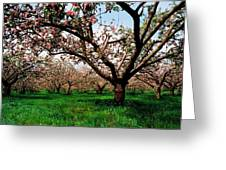 Apple Orchard, Co Armagh, Ireland Greeting Card
