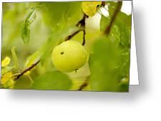 Apple Taste Of Summer Greeting Card
