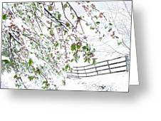 Apple Tree In Bloom With Spring Snow Greeting Card