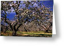 Apple Trees In An Orchard, County Greeting Card