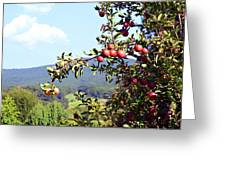 Apples On A Tree Greeting Card