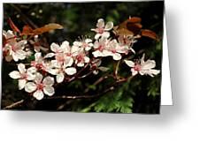 April Plum Blossom Greeting Card