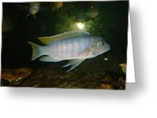Aquarium Life Greeting Card