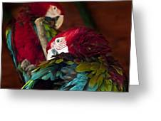 ARA Greeting Card