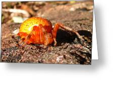 Araneus Marmoeus Greeting Card