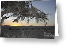 Aravah Desert Landscape  Greeting Card
