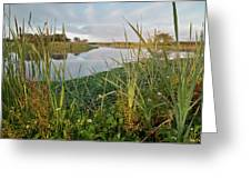 Arcata Marsh Greeting Card